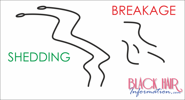 Natural Hair Breakage Vs Shedding